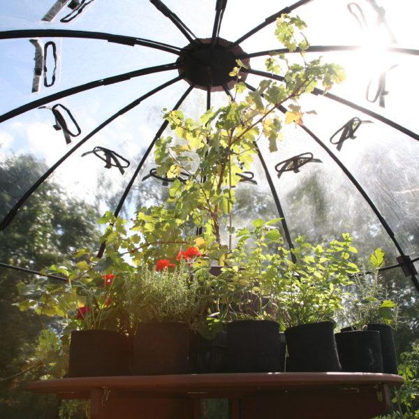 Sunbubble