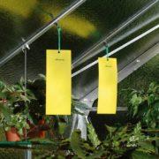 żółte tablice lepne aeroxon