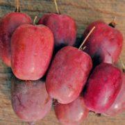 aktinidia kiwi purpurna sadowa 2