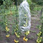 folia do pomidorów perforowana (1)