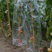 folia do pomidorów perforowana (2)