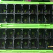 mini szklarenka (1)