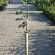 osłonki na drzewka 1