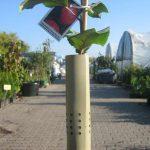 osłonki na drzewka 2