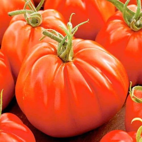 pomidor corazon