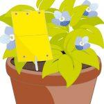 tablice lepne do roślin doniczkowych aeroxon