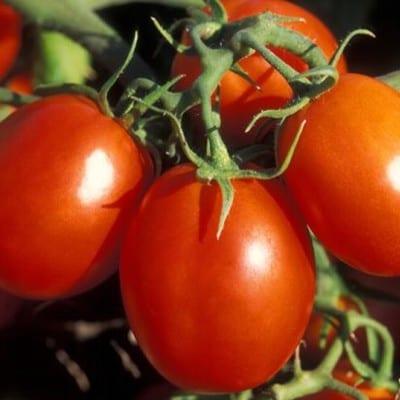 Pomidor awizo F1