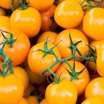 Pomidor drobnoowocowy Figiel
