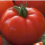 pomidor country taste
