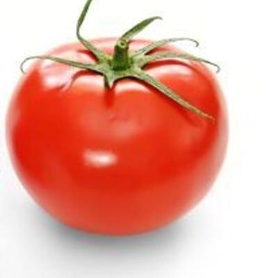 pomidor poranek