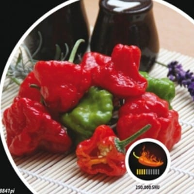 papryka chili Jamaican Rosso