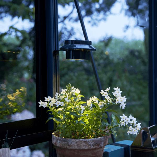 lampy solarne w doniczkach