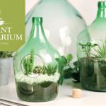 plant terrarium małe